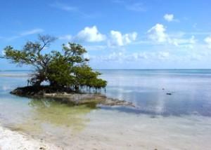 Annes beach for Islamorada Beaches