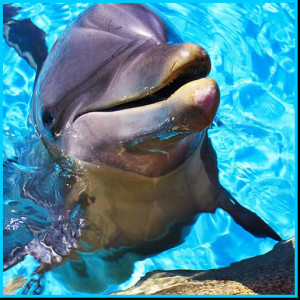 dolphin image for the Florida Keys