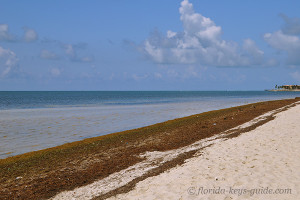 Coco Plum beach image for the Florida Keys Guide