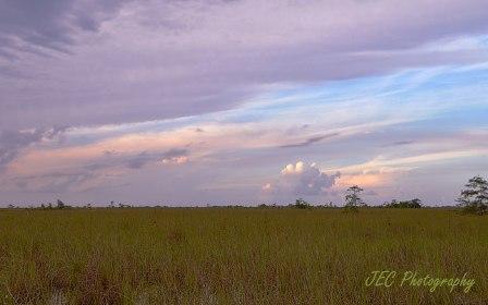 Florida Everglades image