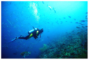 Florida Keys scuba diving image